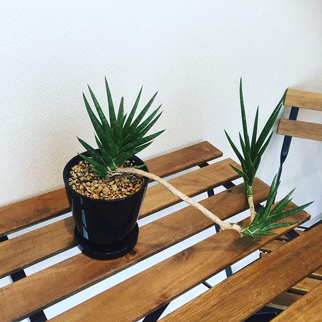 本日の#植物
